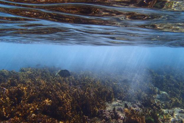 an underwater wonderland fakaofaofa!