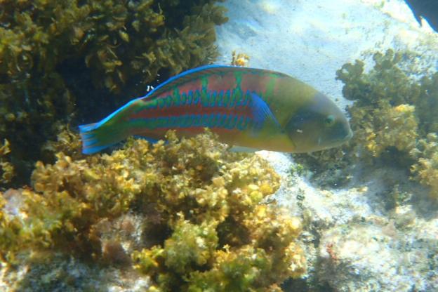 Low tide snorkeling revealed amazing fish